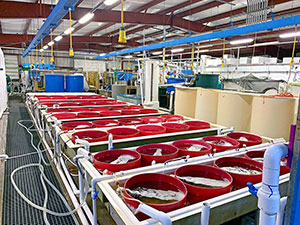 red tanks at the Harbor Branch aquaculture facility